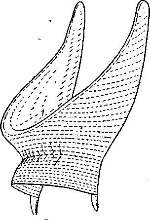 Рогатая кичка