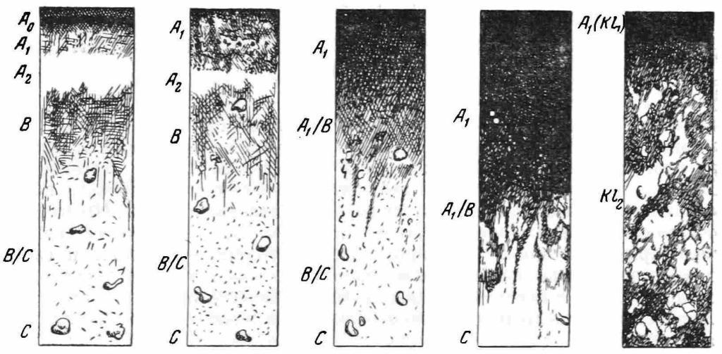 Рис 1. Схематическое изменение дерново-подзолистых почв под влиянием медленного исторического окультуривания. а — лес, дерново-среднеподзолистая почва; б — поле, дерново-среднеподзолистая почва, слабо окультуренная; в — приусадебный огород, дерново-среднеподэолистая почва, средне- до 'сильно окультуренная; г — место древнего поселения, сильно окультуренная почва; д — городище — насыпанная, образованная человеком почва