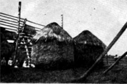 Озерод и оденки (с. Бояничи, БССР)
