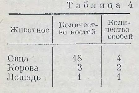 andronovskaya-kultura-baraba-17
