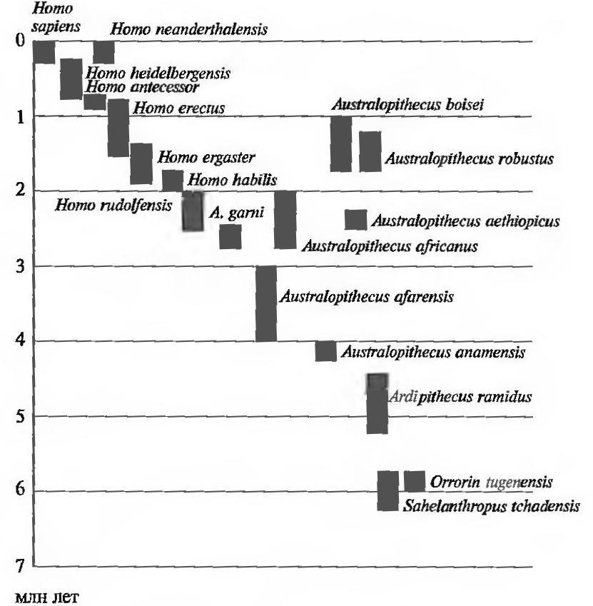 Время существования различных видов гоминид
