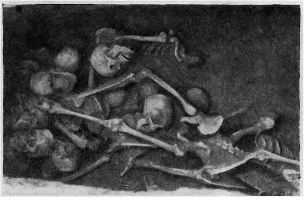 Рис. 4. Черепа и кости в могиле, вскрытой около большой гробницы, раскопанной в окрестностях Аньяна (провинция Хэнань).