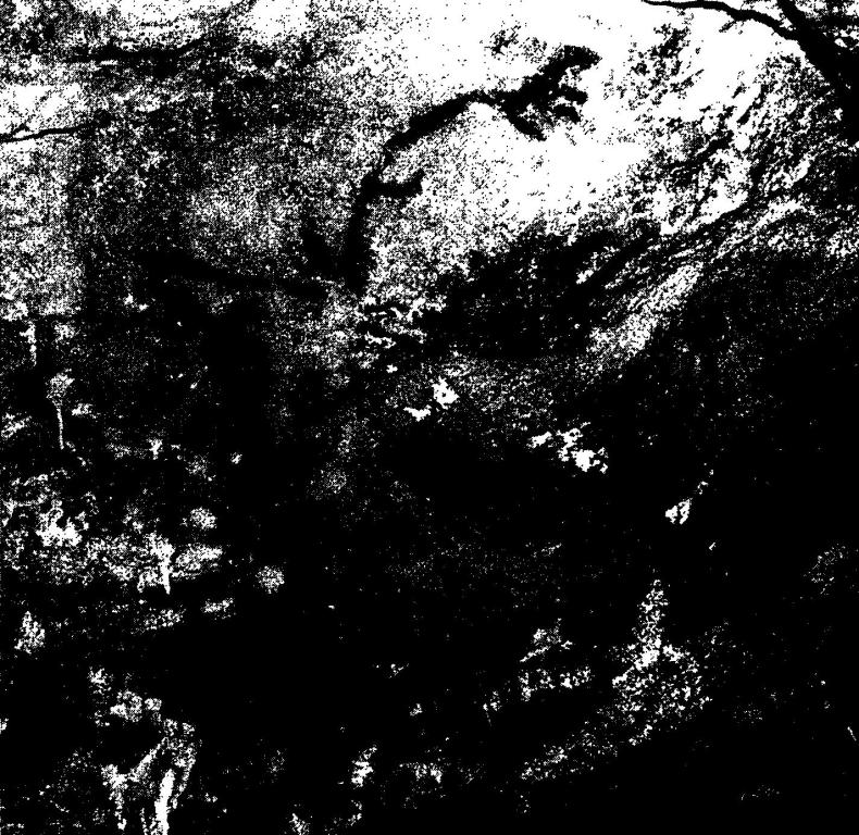 Рис. 37. Изображения животных в пещере Коске относятся ко второй фазе изобразительной деятельности, 19-18,5 тысяч лет назад