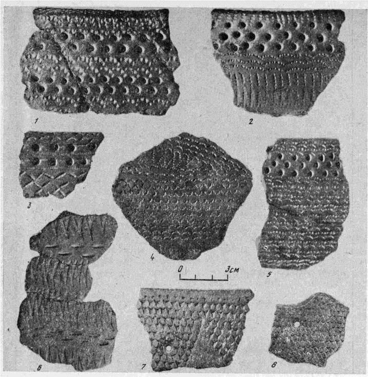 Рис. 1. Типы керамики. 1—5 — ортинский тип: 1, 2, 5 — Пернашор, 3, 4 — бухта Находка; 6—8 — йоркутинский тип (Йоркутинская стоянка)