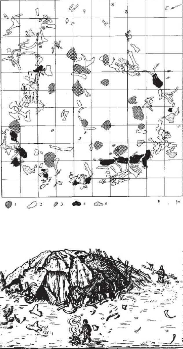 Рис. 17. План остатков жилого сооружения в слое IV мустьерской стоянки Молодова I на Днестре и его реконструкция: 1 - остатки кострищ 2 - остатки костей животных, 3 - зубы мамонта, 4 - череп мамонта, 5 - лопатки мамонта.