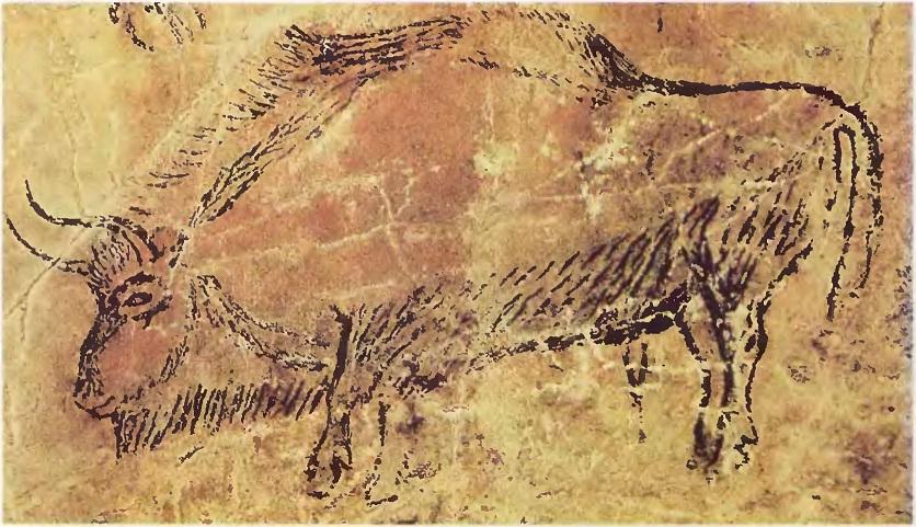Зубр. Ласко (Франция). Верхний палеолит