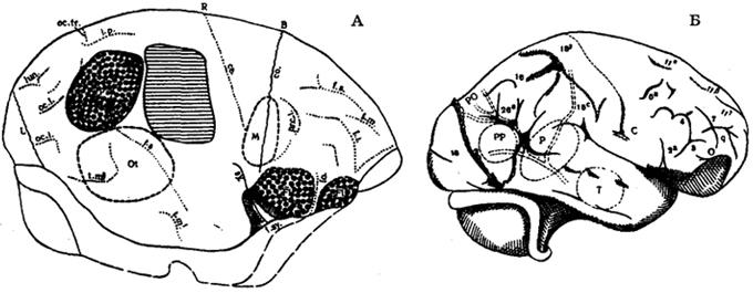Рис. IV. 3. Топография корковых полей на эндокране австралопитека (А) и синантропа (Б) Штриховкой обозначены места дефектов, пунктиром - отпечатки сосудов. R - проекция центральной борозды; со - коронарный шов; L - лямбовидный шов; Ра - возвышение теменное угловое; Fi -возвышение лобное нижнее; М - возвышение прецентральное; Т - возвышение височное; f. Sy - сильвиева яма