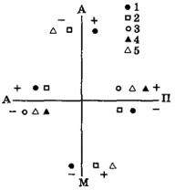 Рис. VII. 5. Схема распределения гормональных показателей (плюс - относительно повышен, минус - относительно понижен) по координатам телосложения: астенопикнонорфной (А-П) у женщин и астено-мезоморфной (А-М) у мужчин в зрелом пубертате. 1 - тироксин, 2 - соматотропин, 3 - инсулин, 4 - эстрогены, 5 - андрогены