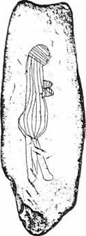 Рис. 19. Схематичне зображення жінки на сланцевій плитці з фінальнопалеолітичної стоянки Рогалик на Луганщині
