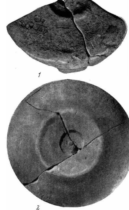 Рис. 2. Образцы днищ майкопской керамики с углубленными оттисками. 1 — Луговое поселение; 2 — Баиутскbй могильник