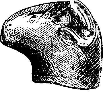 Рис. 60. Горло кувшина в виде головы барана, найденное на территории Спасо-Евфимиева монастыря в Суздале (нат. вел.).