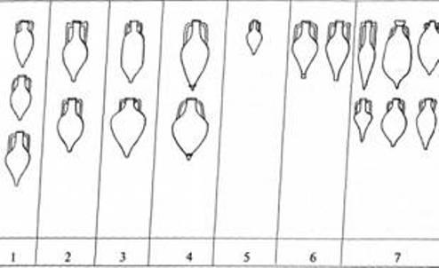 Рис. 24. Імпортні амфори елліністичного періоду: І — Сімопл; 2 — Ролос; 3 — Кос; 4 — Кнід: 5 — Парос; 6 — Фасос; 7 — невідомі центри