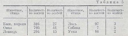 irmenskaya-kultura-baraba-9