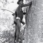 Рис. 6.2. В пустыне Калахари охотник-собиратель народа сэн ищет в стволе дерева мед. С точки зрения экологов, культура человека является всего лишь элементом в экосистеме