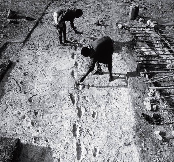 Отпечатки ног гоминида, которым 3,5 миллиона лет. Лаэтоли, Танзания, Восточная Африка