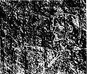 Рис. 21. Профиль В.И. Ленина, выгравированный на скалах Ортаа-Саргола, верхний Енисей