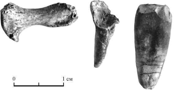 Рис. 5. Дистальная фаланга и фрагменты зубов. Шизе IV, курган 185