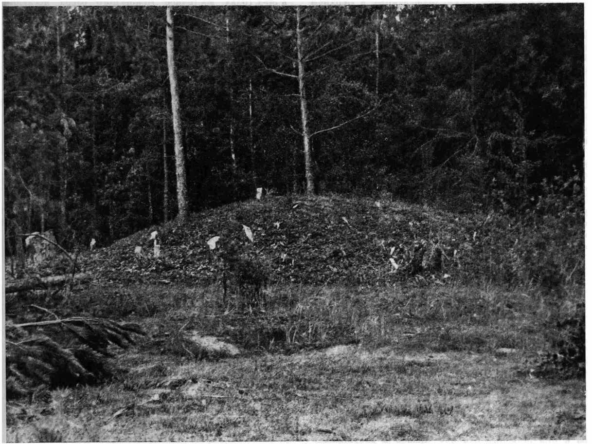 Рис. 11. Один из круганов близ д. Казиха