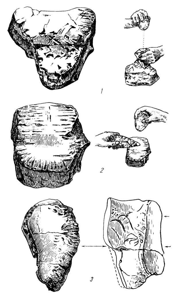 """Рис. 50. Костяные орудия из грота Кош-Коба: 1 — промежуточная кость из левой кисти мамонта; 2 — кароальная кость мамонта со следами использования в качестве «наковален""""» 3 — ульварная кость мамонта со следами работы"""