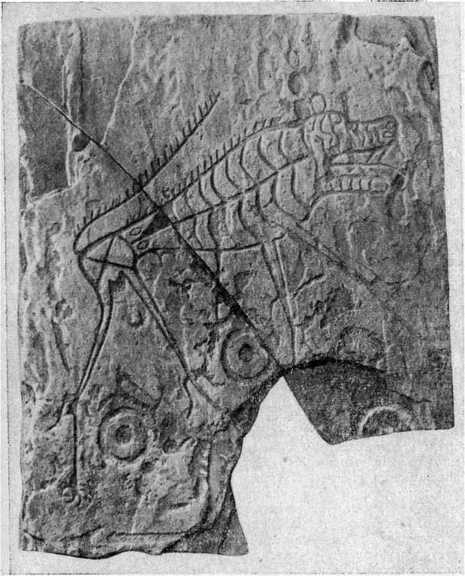 Рис. 25. Обломок стелы из могильника окуневской культуры Черновая VIII (Г. А. Максименков, 1962)