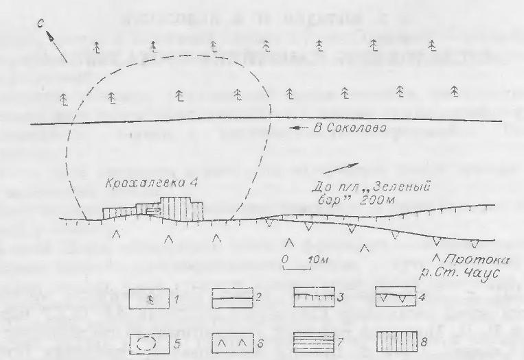 Рис. 1. Крохалевка-4. Схематический план. 1 — бор; 2 — дорога; 3 — кран надпойменной террасы; 4 — край пойменной террасы; 5 — предполагаемые границы памятника; в — пойма; 7 — раскоп 1974 г.; 8 — раскоп 1977 г.