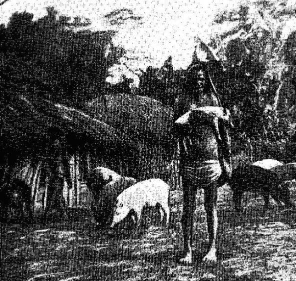 Папуас-свиновод
