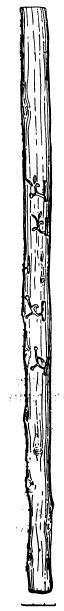 Рис. 2. Деревянный локоть (прорись)