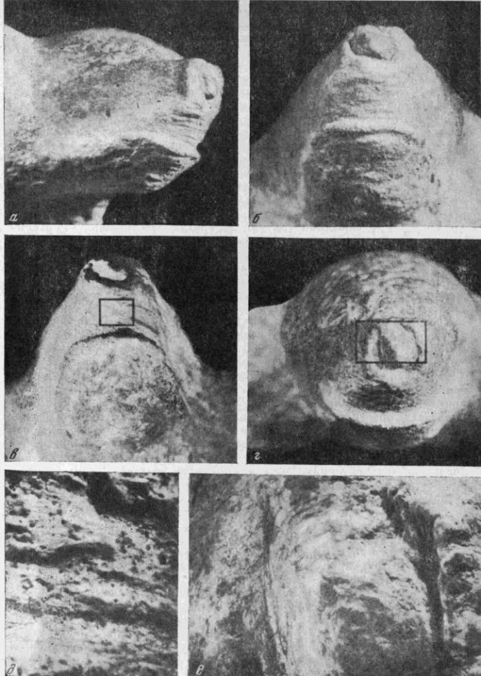 Голова медведя, сфотографированная в разных ракурсах. На средних фотографиях показаны участки, которым соответствуют увеличенные детали нижнего ряда со следами обработки