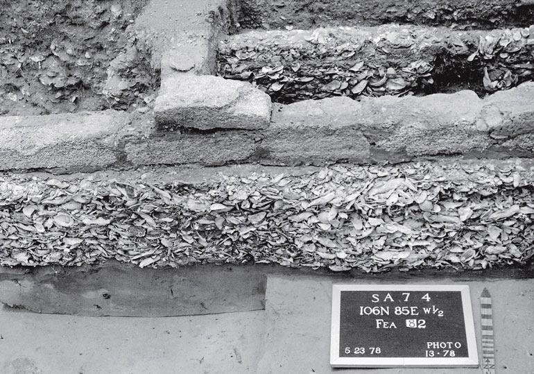 Рис. 9.7. Горизонтальные раскопки в Сейнт-Августине, Флорида. Видно основание дома начала XVIII века из материала с раковинами устриц