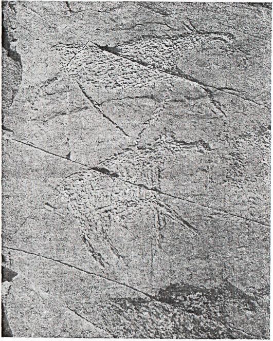 Рис. 77. Минусинская котловина. Усть-Туба II