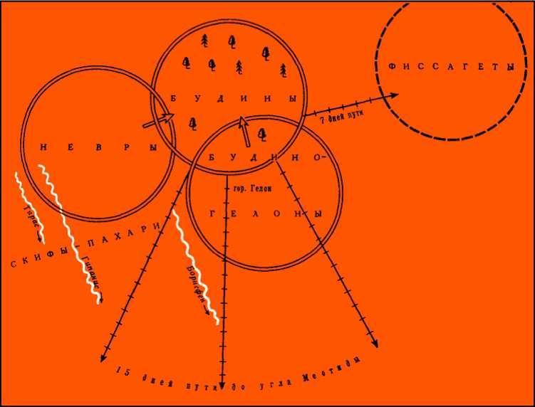 Будины, невры, гелоны (условная модель размещения)