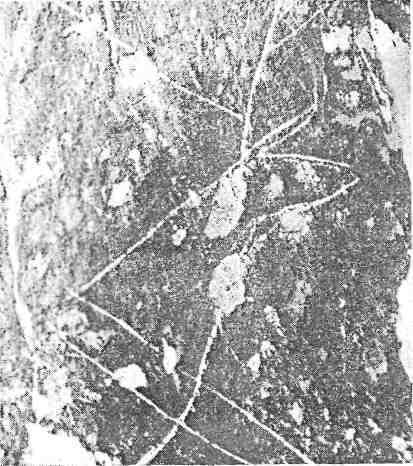Рис. 11. Мугур-Саргол. Тонкая гравировка перекрыта выбоинами