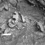Рис. 3. Амуд 7 Погребение и фрагмент нижней челюсти благородного оленя, расцененный как «жертва», принесенная ребенку, челюсти и рога животных (Схул 5, Кафзех 11) соответствуют тафологическому контексту погребения. (Première Humanité., 2008. Р. 91)