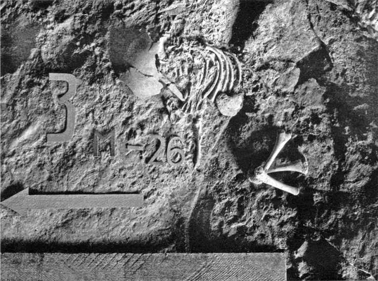 Рис. 1. Мезмайская 1. Фотография погребения. Скелет новорожденного в слое пещерной стоянки. Полные останки детей (Кафзех 10, Дедерийя 1) и новорожденных (Мустье 2, Мезмайская 1) - исключения, подтверждающие правило Мортилье: или обвал, или намеренное погребение. (Première Humanité., 2008. Р. 70).