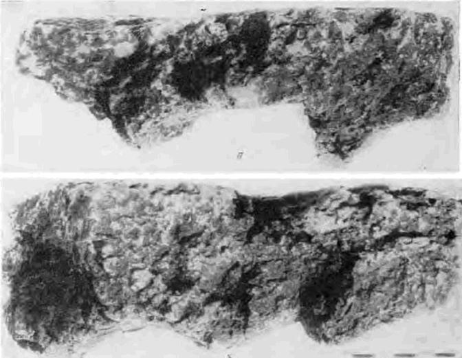 Рис. 4. Раковец. Отпечатки дерева на глине. Снимок кусков глины в профиль