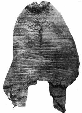 Рис. 18а. Болванка сапога из раскопок в Новгороде.
