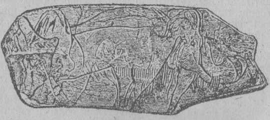 Рис. 18. Мамонт, вырезанный на костяной пластинке (грот Мадлены).