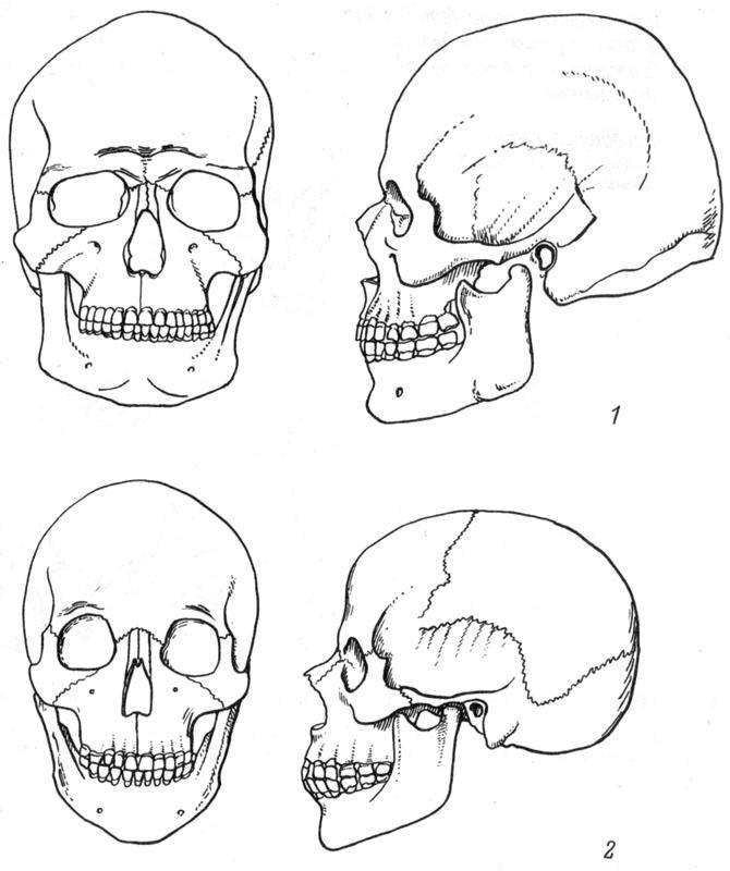 Рис. 12. Половые особенности мужского (1) и женского (2) черепов.