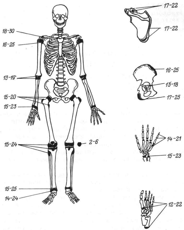 Рис. 29. Определение возраста по костям посткраниального скелета.