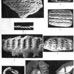 Рис. 52. Техника нанесения шнурового орнамента: 1 — фрагмент сосуда ямочно-шнуровой керамики (неолит Карелии); 2 — пластилиновый слепок со шнурового орнамента; 3 — шнурок из пеньки в две пряди; 4 — оттиск шнурка на пластилине; 5 — фрагмент «сосуда ямочно-шнуровой керамики; 6 — пластилиновый слепок с орнамента; 7 — штамп в форме жгутика, свитого из шнурка; 8 — способ нанесения орнамента жгутовым штампом.