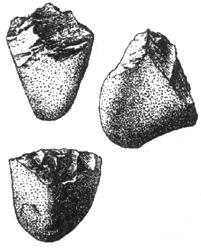 Рис. I. 7. Олдувайская культура нижнего палеолита. Питекантропы (древнейшие люди, архантропы)