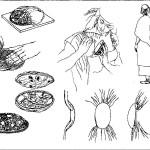 Рис. 96. Изготовление и ношение скорлупообразных фибул