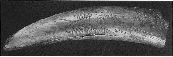1. Орнамент на бивне мамонта из Кирилловской стоянки. Поздний палеолит.