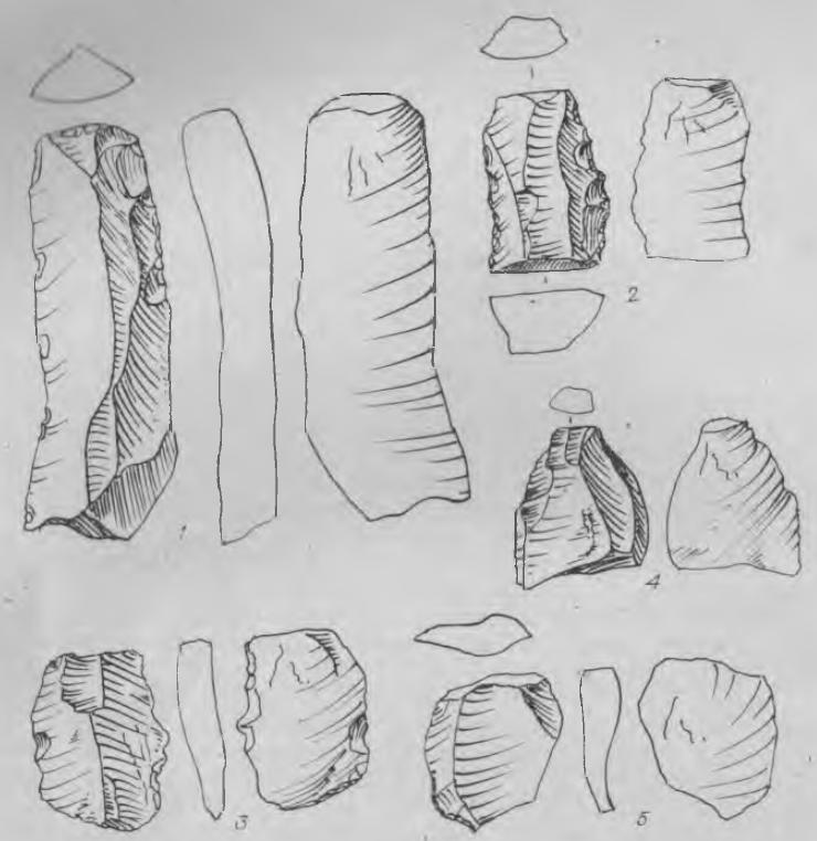 Рис. 1. Пункт I «Аршан». Орудия. 1 — пластина с ретушью; 2 — обломок трехгранной пластины с зубчатой ретушью; 3 — пластинчатый отщеп с зубчато-выемчатой ретушью; 4—5 — отщепы.