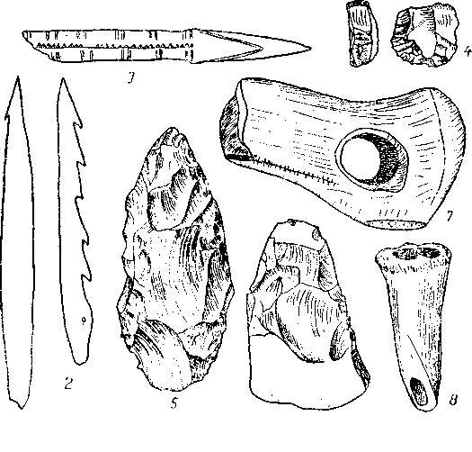 Рис. 6. Различные тины орудий Маглемозе из Зеландии 1—3, 7-8 (1/2); 4 (2/3); 5-6 (4/5)