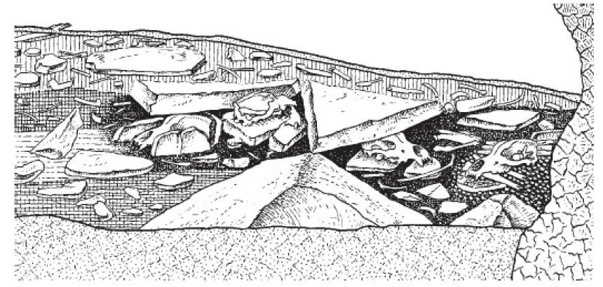 Рис. 43. Черепа пещерного медведя в пещере Драхенлох, Швейцарские Альпы.