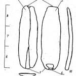 Рис. 1. Пластина. Составляющие ее элементы: 1 проксимальный конец; 2 — дистальный конец; 3 дорсальная часть; 4 — вентральная часть; 5 — талон (рудимент ударной площадки); 6 — проксимальная часть; 7 — медиальная часть; 8 — дистальная часть; 9 — поперечный разрез; 10 — профиль