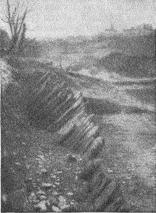 Рис. 14. Палисады, обнаруженные на дне оз. Неми