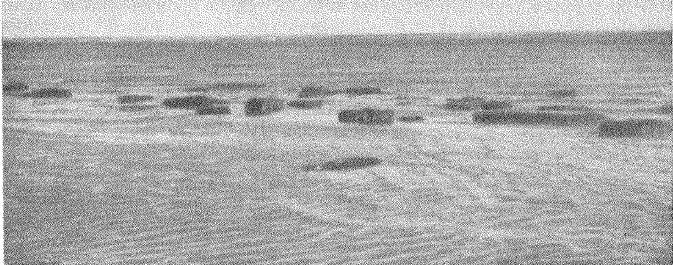 Рис. 3. Крупные блоки ольвийских стен, сфотографированные во время спада воды