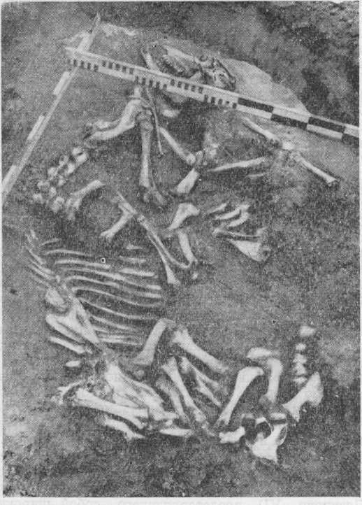 Рис. 3. Кокуй II. Погребение животных.